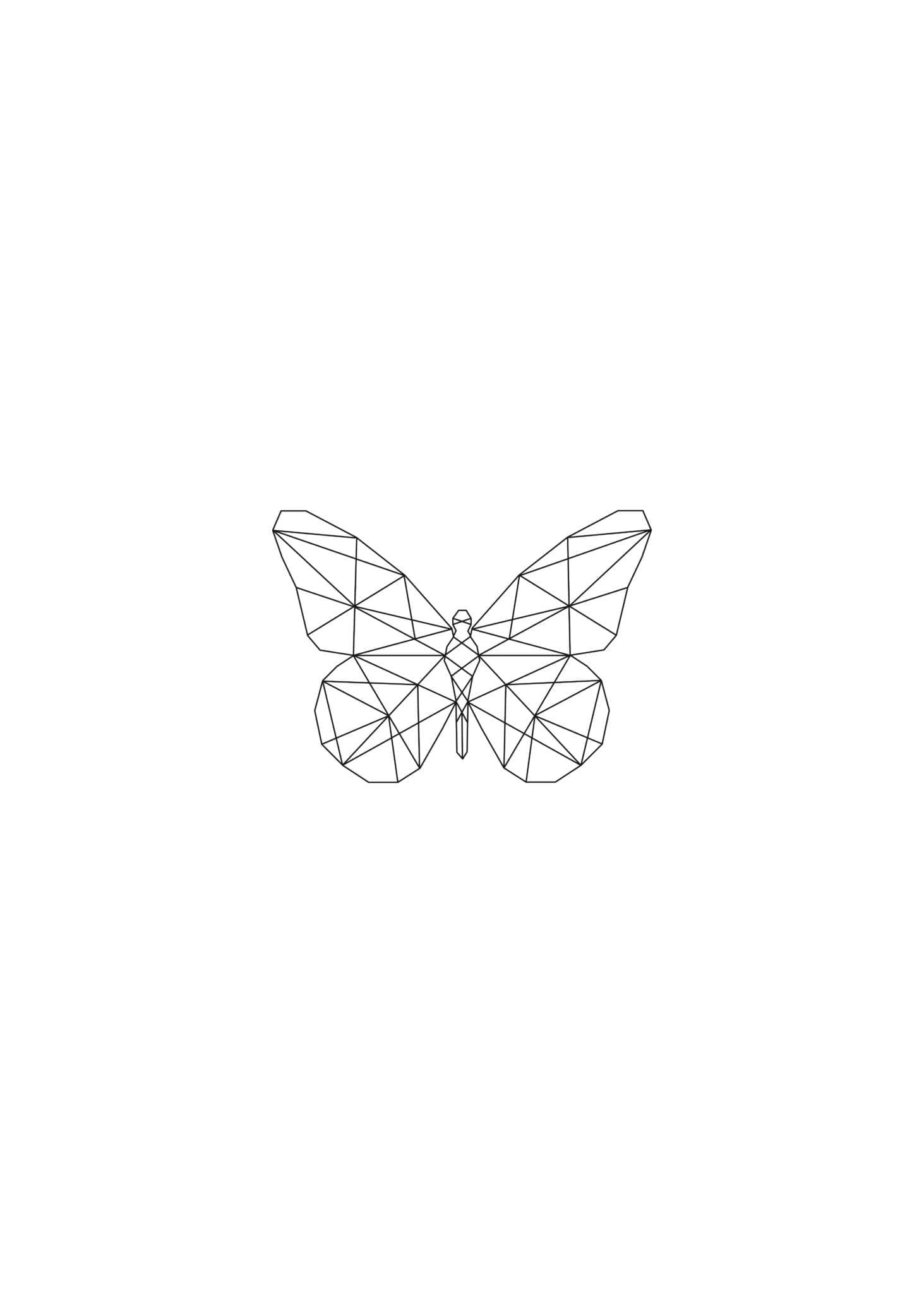 Lined Butterfly