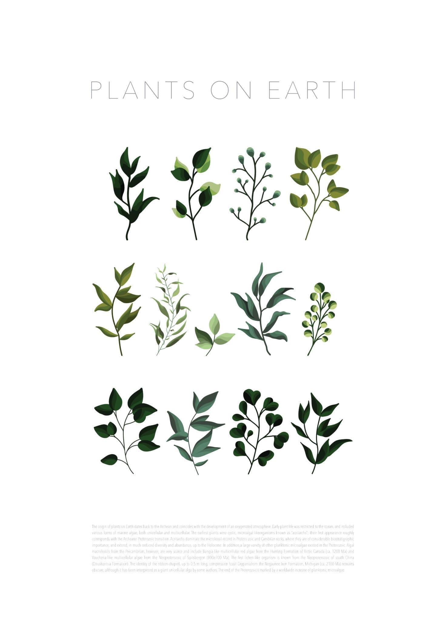Plants on Earth